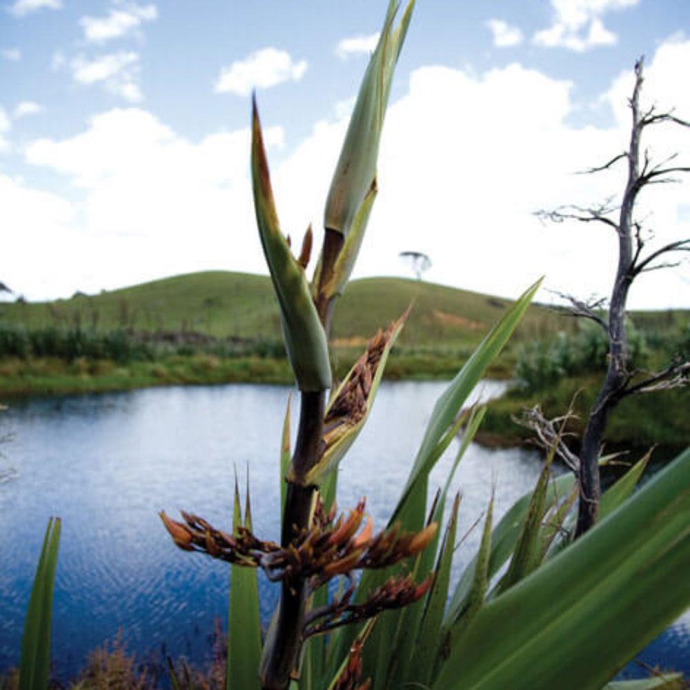 Restoring our<br /> wetlands